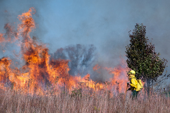 Clermont, Kentucky – October 22, 2015: Firefighters manage a controlled burn at Bernheim Arboretum and Research Forest in Clermont, Kentucky, on October 22, 2015.